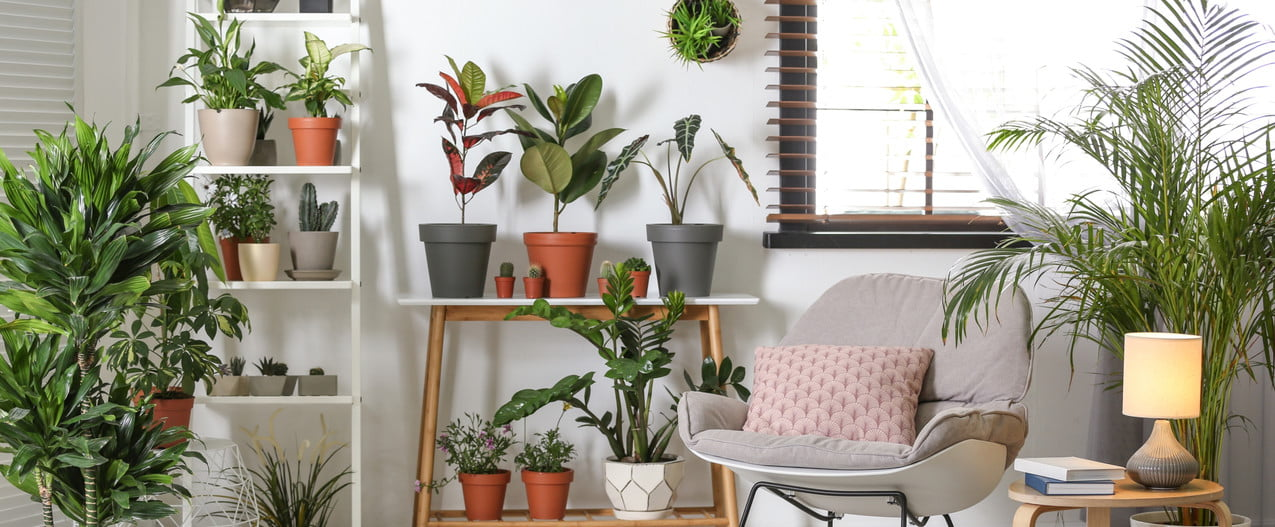 apartment with shelves and potted plants