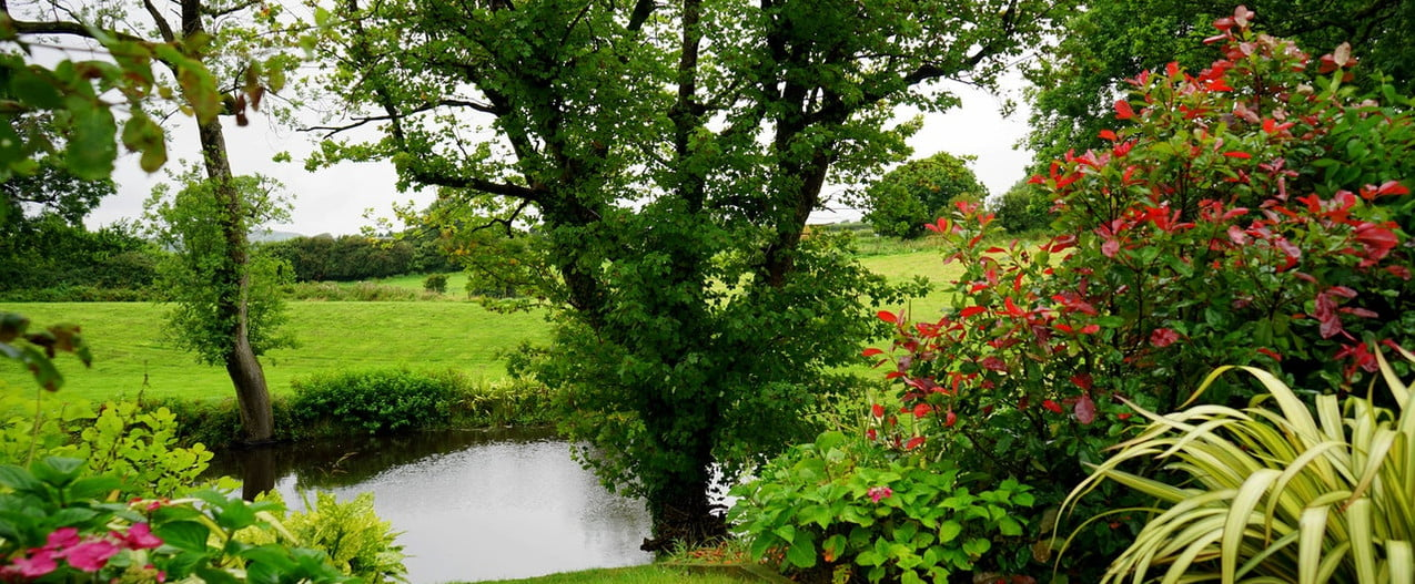 lawn landscape with tree and river