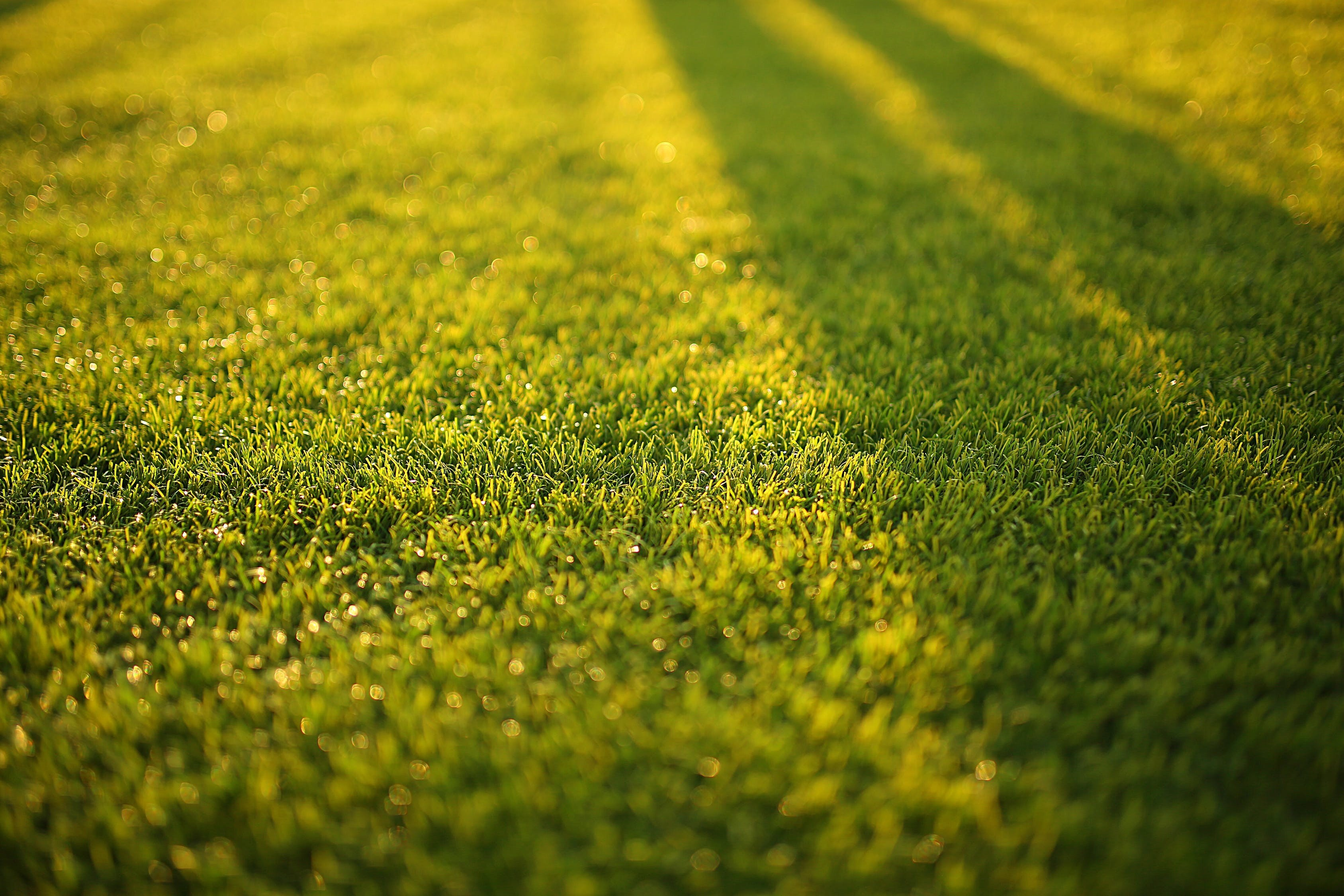 6 Ways You Can Prepare Your Lawn for Winter   21Oak