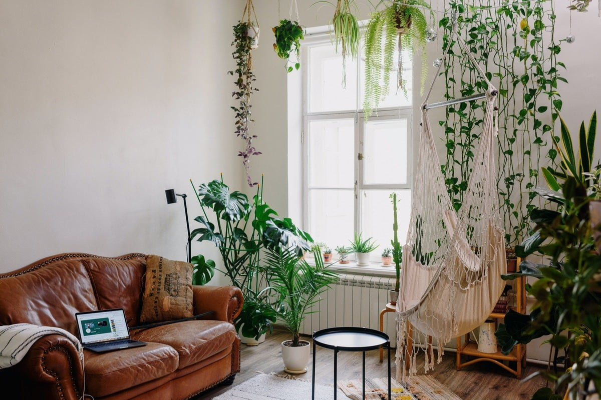 How to find inexpensive house plants for your home | 21Oak