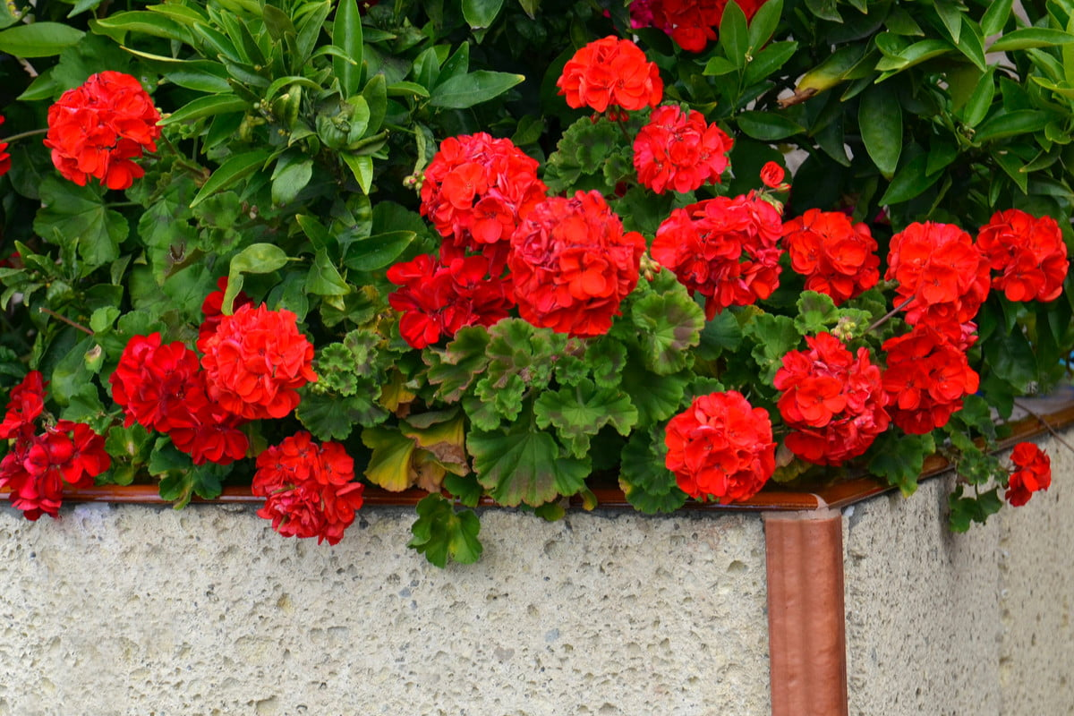 4 Ways to Prep Your Flower Beds for Winter Weather | 21Oak