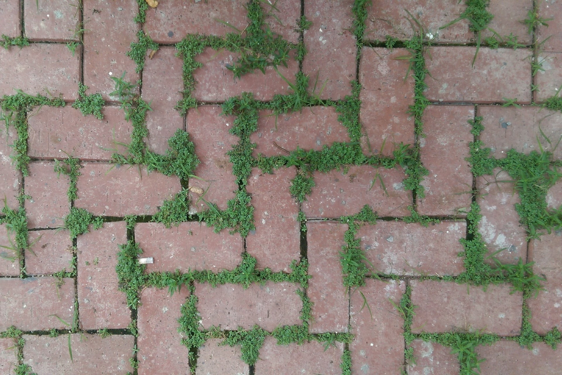 How To Kill Pesky Weeds From Between Your Patio Pavers | 21Oak