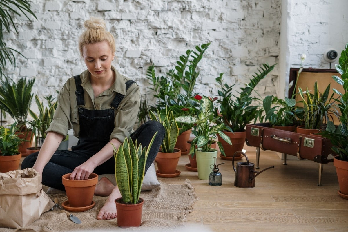 How to repot your favorite plants when they get too big | 21Oak