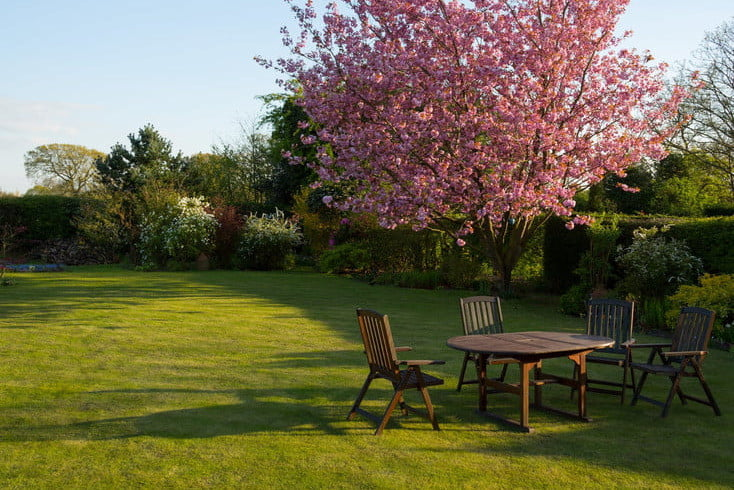 lawn care tips new homeowners yard with flowering tree