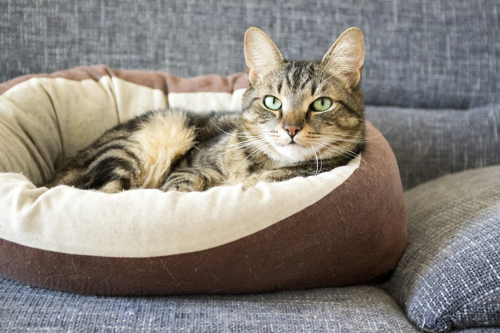 Best Indoor and Outdoor Cat Beds