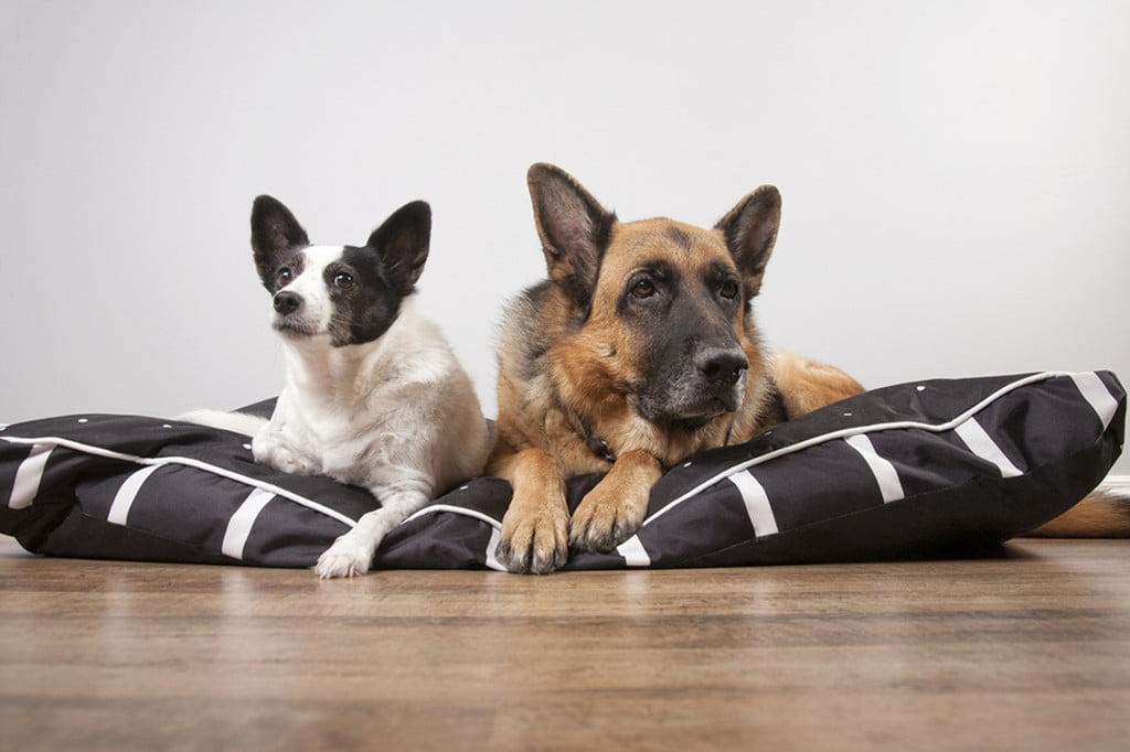 Picture of: The Best Extra Large Dog Beds For Your Gentle Giant Pawtracks