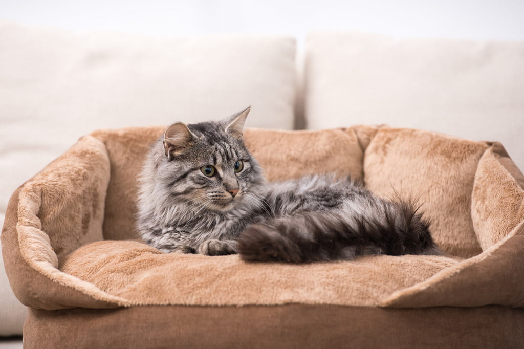 Picture of: The Best Large Cat Beds For Long Naps Pawtracks