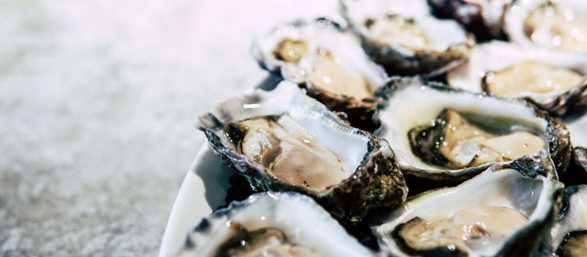 oysters-on-silver-background