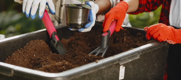 Gardeners adding compost to a plant