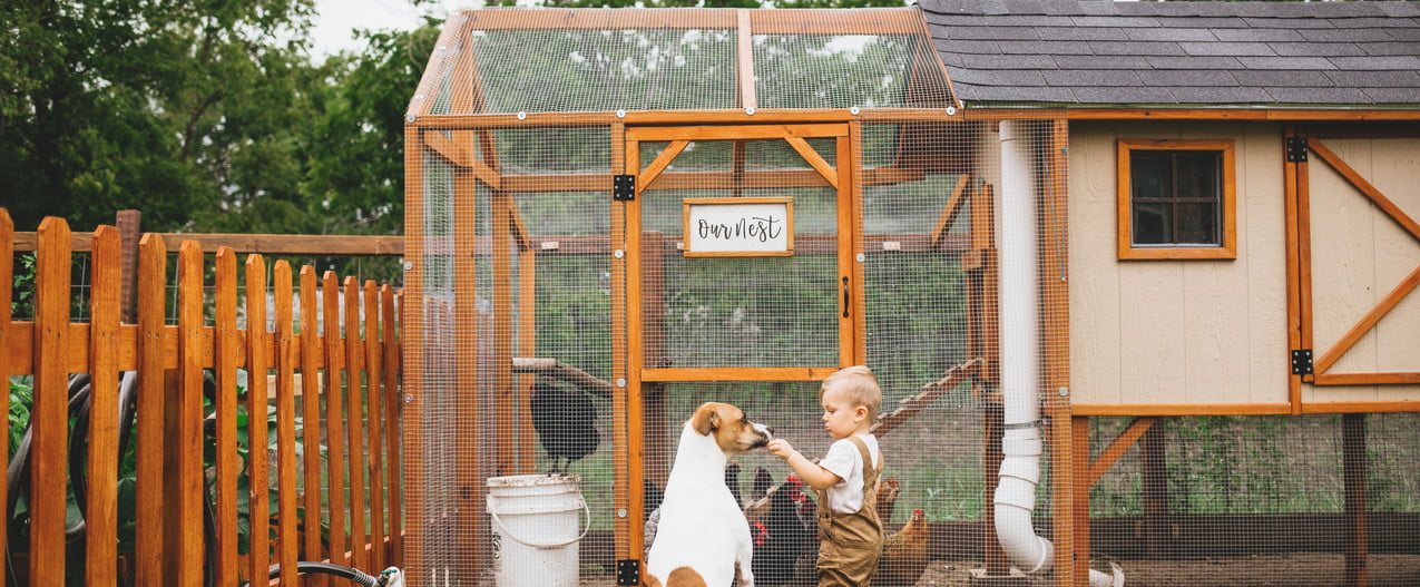 Child stands before chicken coop with his dog