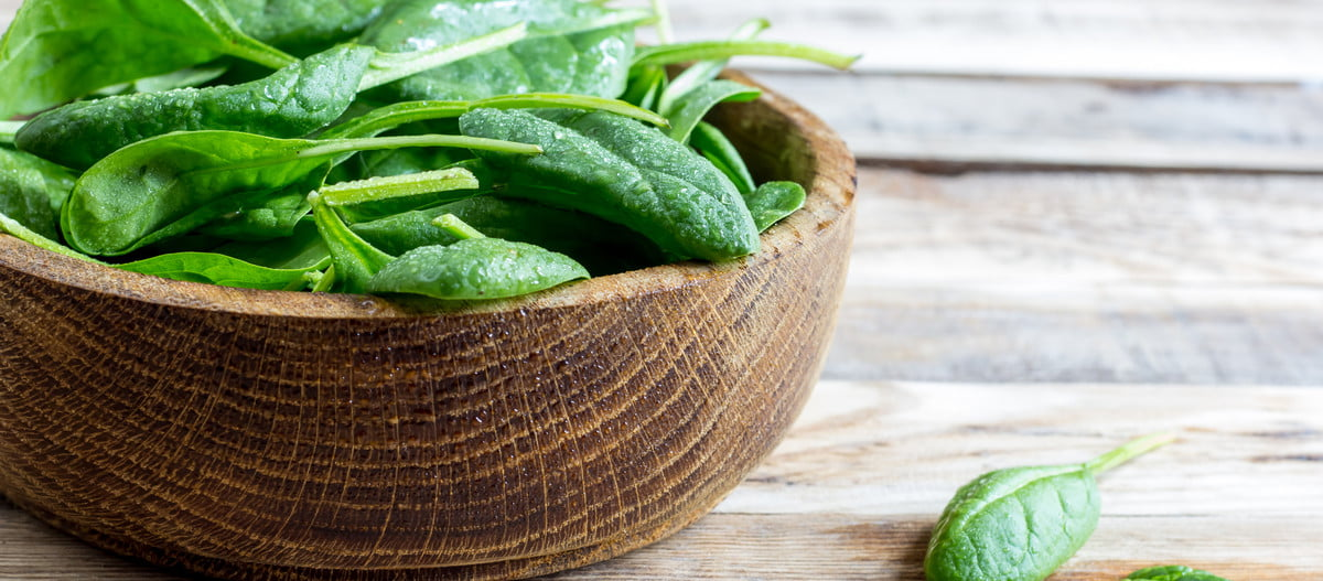 Freshly harvested spinach leaves in a bowl