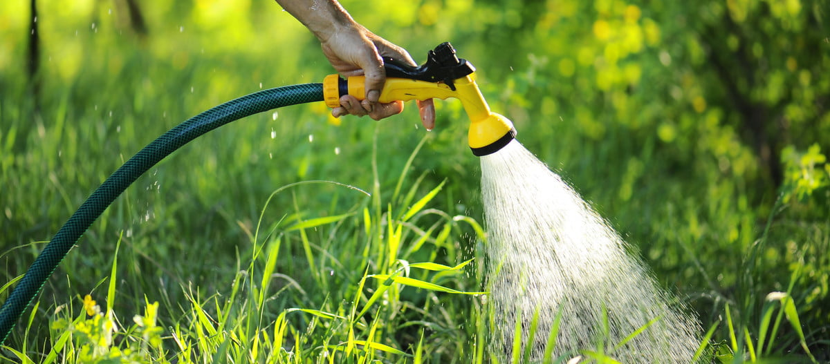 watering plants with a garden hose