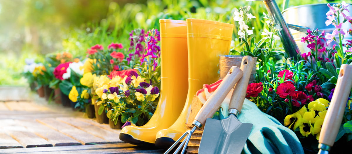 Yellow boots, metal garden tools, green gloves, and a metal watering can in a flower bed next to a wooden garden path