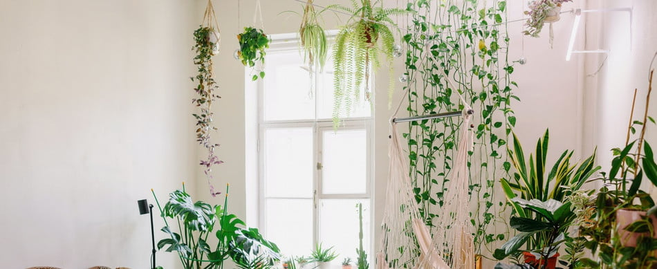 Living room with an accent vine