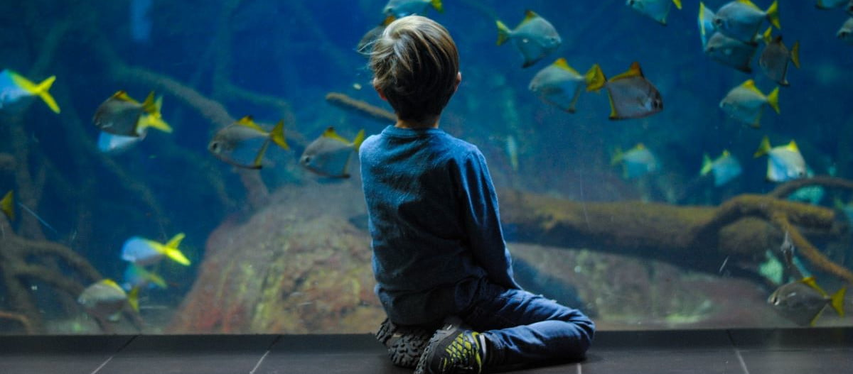 Little boy sitting in front of an aquarium watching the fish