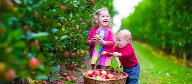 Two young children picking apples in orchard