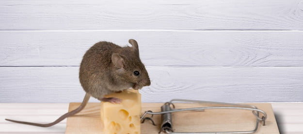 the best rat traps to keep vermin away