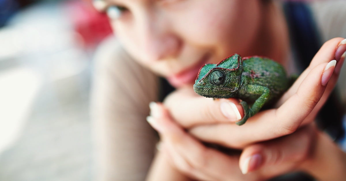 These are the 10 most popular reptile pets in the US - Pawtracks