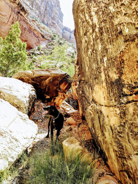 a black dog stands in the water beneath large rocks, in a canyon