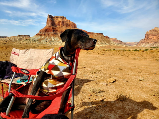 A black labrador/Dane/pit mutt in a multi-colored geometric-patterned sweater sits in a red lawn chair in the desert, under a bl