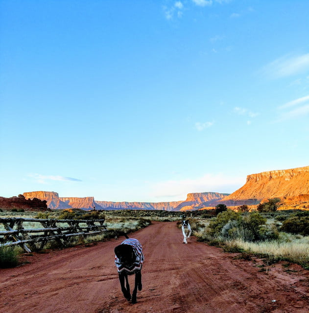 a black dog runs along a red dirt path in a desert, with mesa plateaus behind him