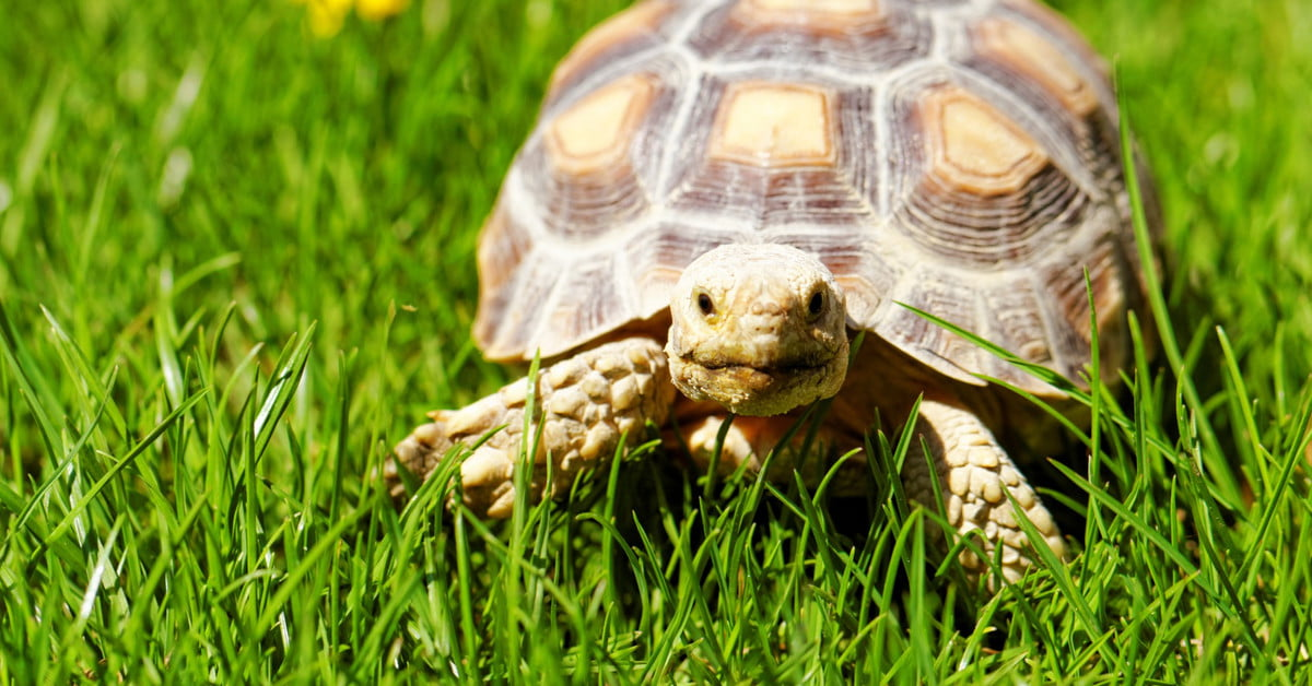 Turtle or tortoise? Here's how to choose - Pawtracks