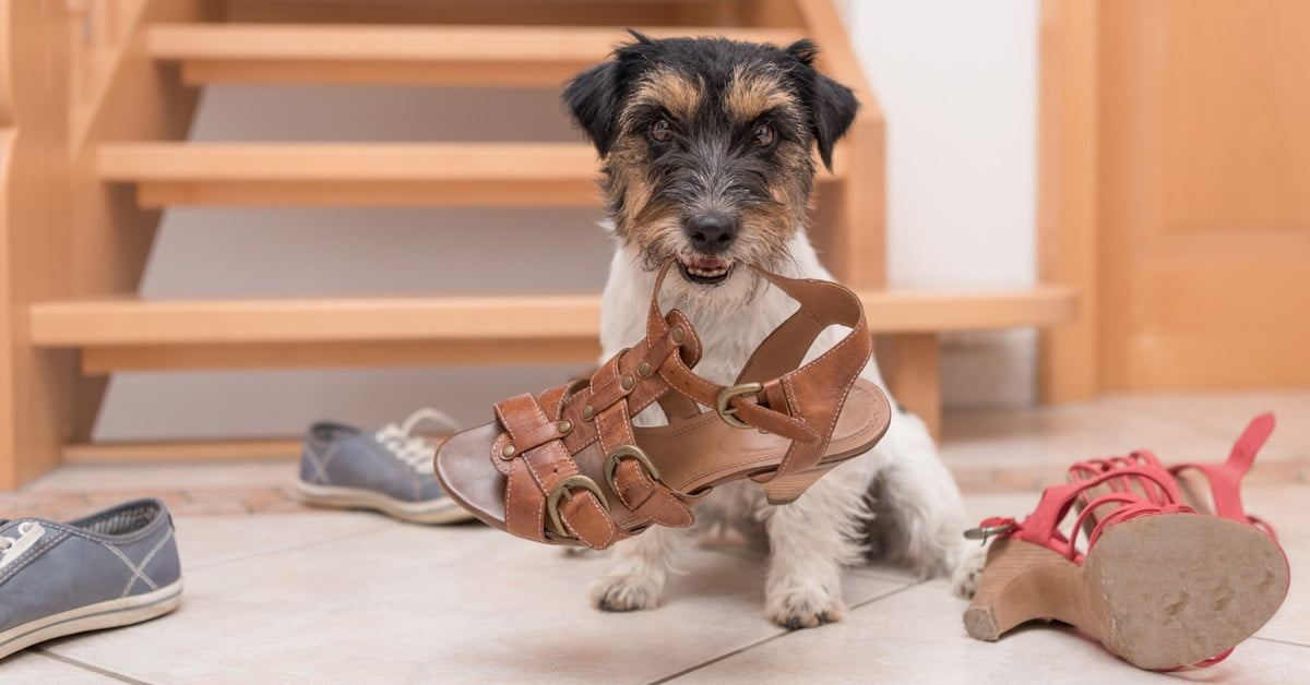 How to keep a teething puppy from destroying your home - Pawtracks